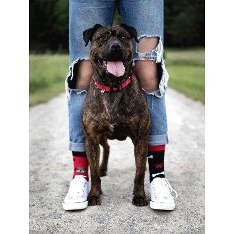 HESTY Veselé ponožky HESTY - Toby 43-46